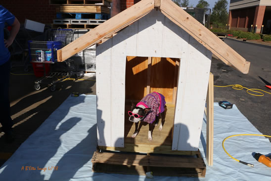 Dog House Raffle